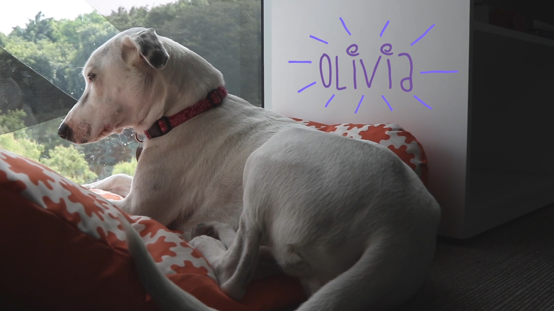 Meet Olivia A rescued dog in our El Salvador location has become a big part of our family and values.